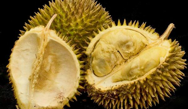 durian_main