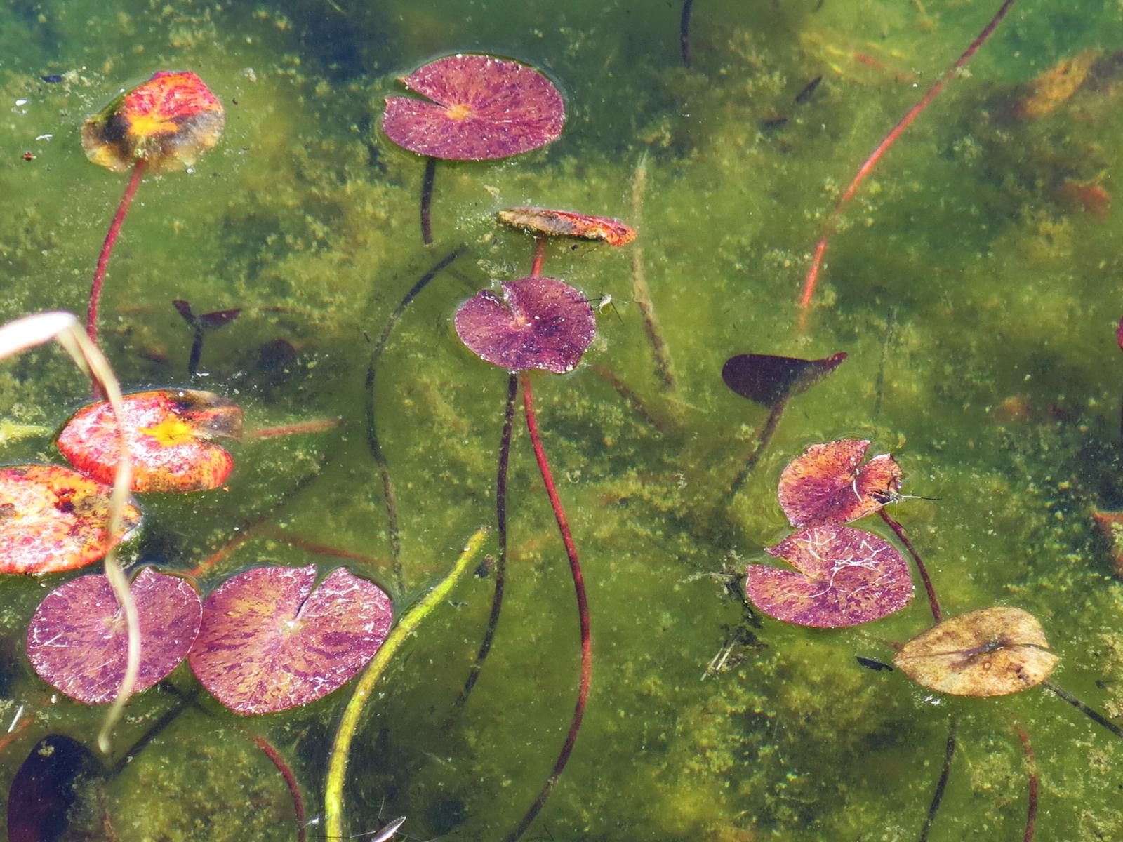 pondforms