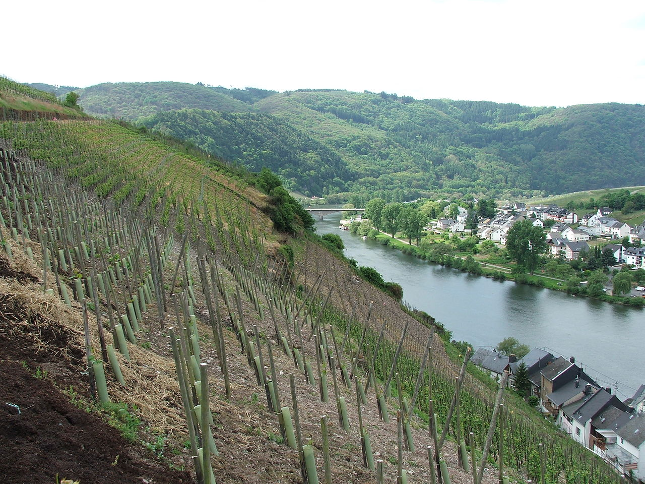 1280px-080110_zell_mosel
